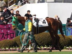 20140118 中山競馬場 ポッドコンジュ 04