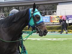 20160130 東京3R 3歳未勝利 アイルーロス 05