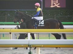 20181124 東京11R キャピタルS(OP) プロディガルサン 11