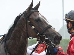 20170917 中山5R 2歳牝馬メイクデビュー ショウナンアーデン 18