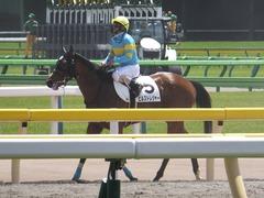 20170506 東京5R 3歳牝馬500万下 ビルズトレジャー 21