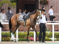 20160903 札幌12R 日高特別(1000) ツクバアスナロ 16