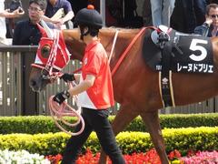 20170527 東京10R 葉山特別(1000) レーヌドブリエ 04