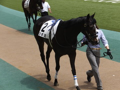 20160514 東京5R 3歳牝馬未勝利 ツボミ 11