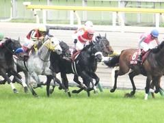 20150516 東京11R 京王杯SC(G2) ショウナンアチーヴ 15