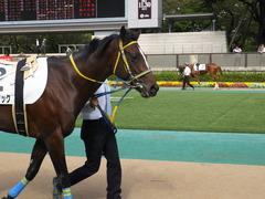 20141026 東京4R ラッシュアタック 04