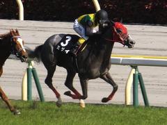 20170430 東京11R スイートピーS 3歳牝馬OP ミザイ 17
