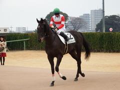 20171224 中山5R 2歳メイクデビュー ダノンシャレード 16