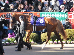 20131222 有馬記念 オルフェーブル 01