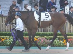 20161120 東京1R 2歳未勝利 メガポリゴン 05