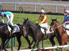 20170114 京都8R 4歳上牝馬500万下 サラマンカ 18