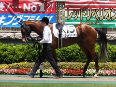 20140517 東京4R レッドリベリオン 06