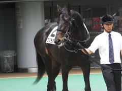 20150523 東京3R 3歳未勝利 コスモポッポ 02