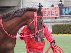 20190126 東京10R クロッカスS 3歳OP オトナノジジョウ 12