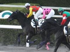 20170114 京都8R 4歳上牝馬500万下 サラマンカ 16