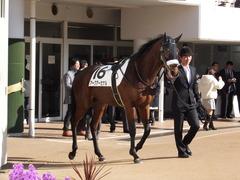 20151227 中山4R 2歳メイクデビュー アークアーセナル 02