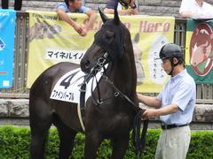 20170625 東京6R 3歳未勝利 ファインパープル 14