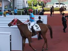 20150404 阪神4R 3歳未勝利 レーヌドブリエ 19