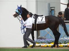 20190414 中山6R (500) アドマイヤムテキ 05