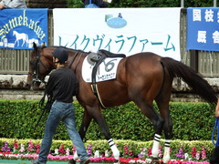 20171007 東京4R 3歳上障害未勝利 トーセンカナロア 03