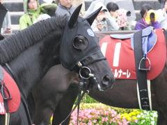 20151108 東京11R AR共和国杯 サトノノブレス 08
