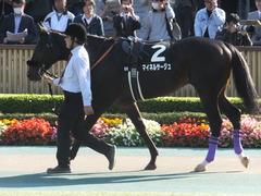 20161105 東京9R 南武特別(1000) マイネルサージュ 11