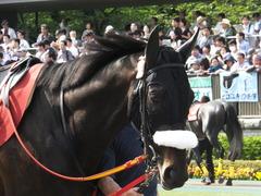 20140503 東京11R 青葉賞 ショウナンラグーン 09