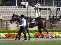 20161105 東京9R 南武特別(1000) マイネルサージュ 04