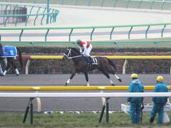 20150222 東京11R 金蹄S ショウナンアポロン 09