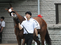 20170625 東京1R 3歳牝馬未勝利 プンメリン 05