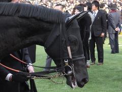 20141228 中山10R 有馬記念 サトノノブレス 03