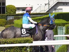 20150425 京都11R 錦S  アドマイヤビジン 16