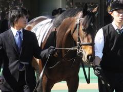 20131116 東京 サンドラバローズ08