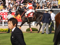 20140921 新潟11R セントライト記念 ショウナンラグーン 11