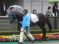 20141101 東京8R トレジャーマップ 05