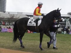20170114 京都8R 4歳上牝馬500万下 サラマンカ 12