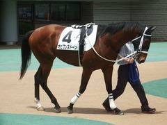20190518 東京4R 3歳未勝利 オビワンズドーン 02