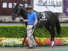 20170625 東京11R パラダイスS 3歳上(OP) ショウナンアチーヴ 03