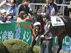 20140316 中山6R ショウナンラグーン 08