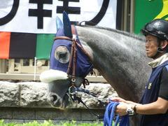 20180609 東京6R 3歳牝馬未勝利 ウェディングベール 12
