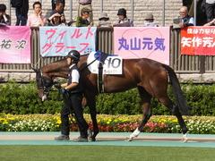 20141011 東京8R ヴィルトグラーフ 03