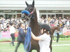20190928 中山10R 茨城新聞杯(2勝) ミッキーバード 09