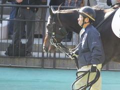 20151129 東京2R 2歳未勝利 ラルゴランド 07