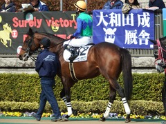 20180217 東京4R 4歳上障害未勝利 トーセンカナロア 14