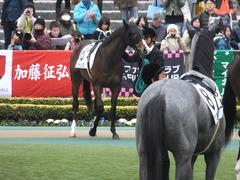 20150222 東京4R 3歳未勝利 ロジダーリング 06
