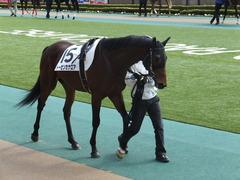 20150221 東京5R 3歳未勝利 トーセンカナロア 04