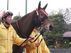 20151224 大井2R 2歳新馬 マルカンヒラリー 11