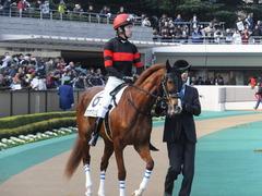 20160131 東京1R 3歳未勝利 ホウオウマリリン 05