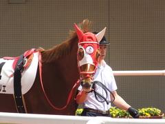 20160618 阪神8R 3歳上牝馬500万下 レーヌドブリエ 05