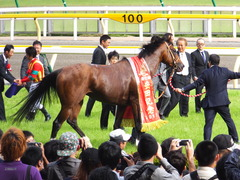 20150607 東京11R 安田記念(G1) モーリス 21